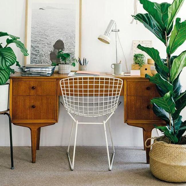 deco bureau scandinave vintage plante