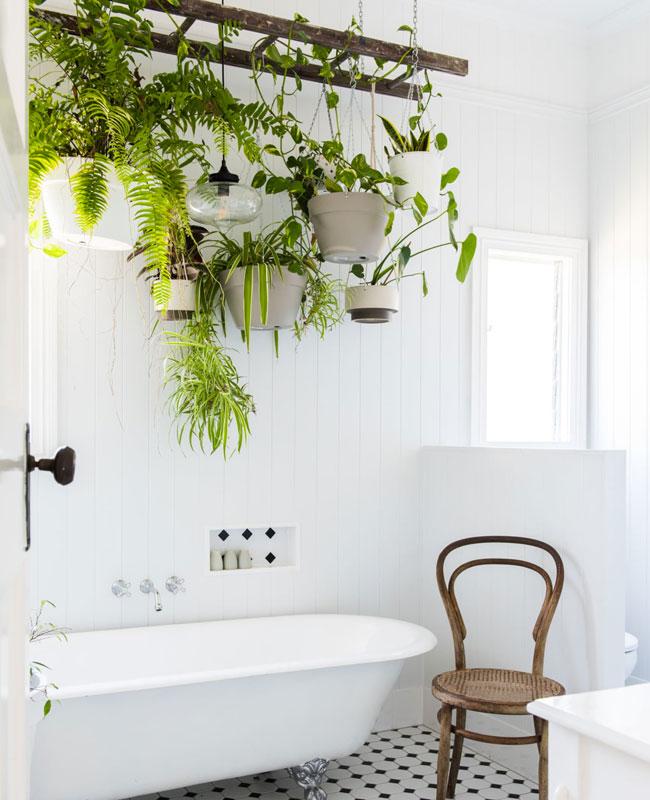 deco plante salle de bain suspension échelle