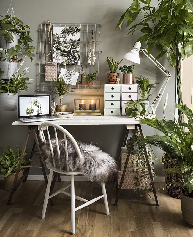plantes deco bureau nature