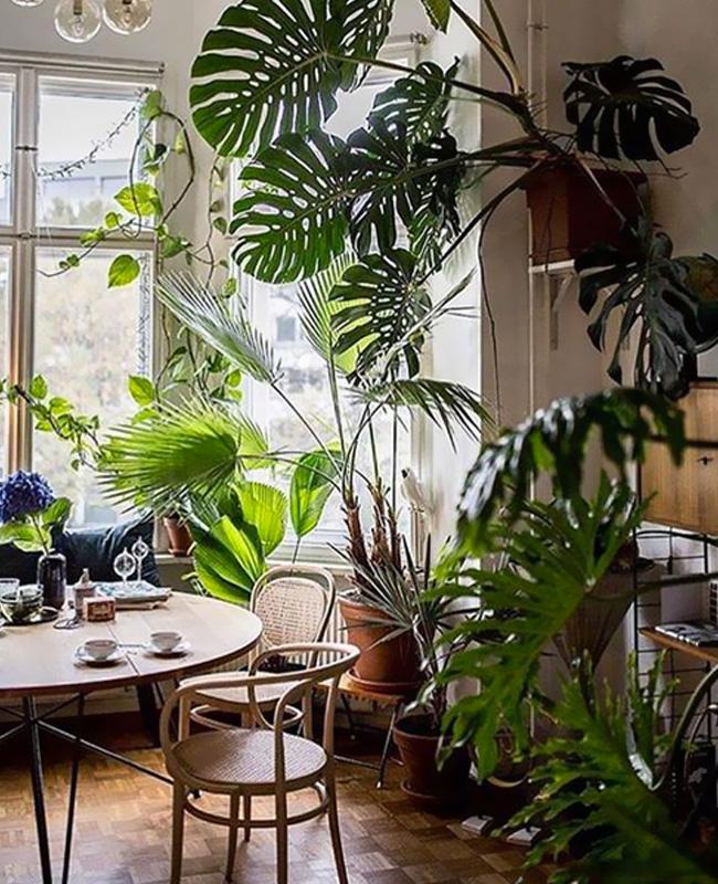 deco salle a manger tropicale plantes