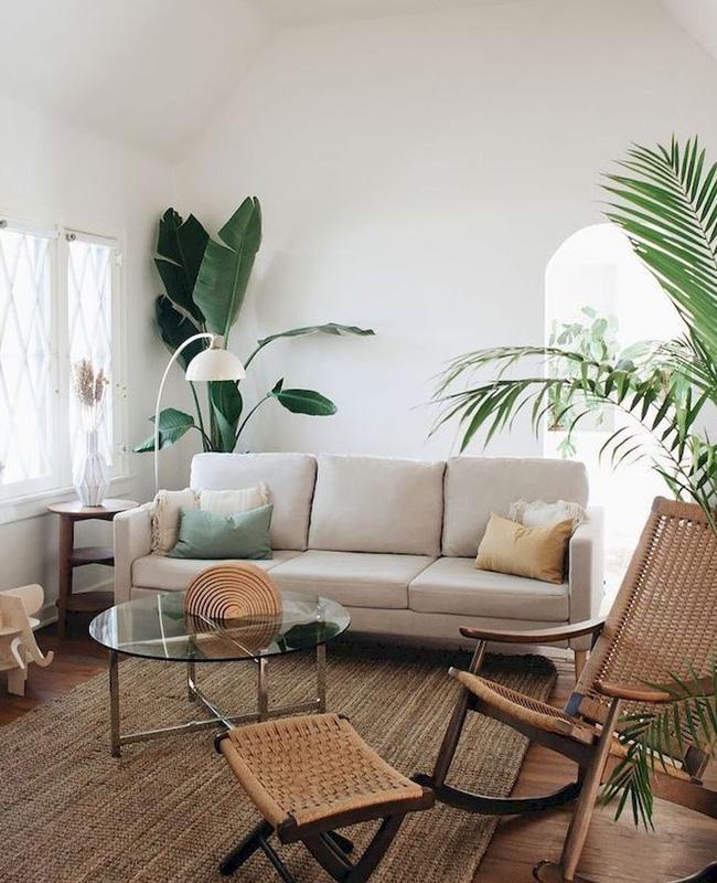 deco salon tropical plante géante