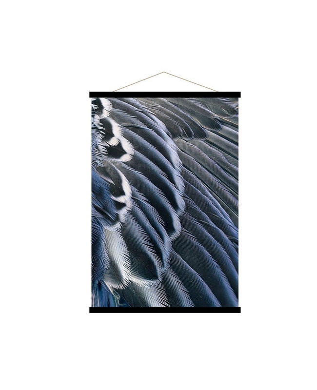 affiche plumes bleu nuit