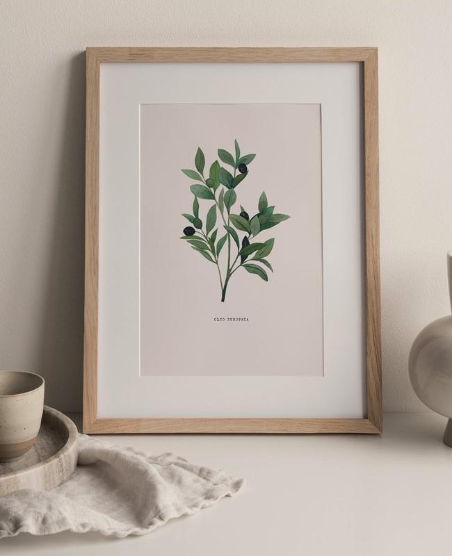 affiche branche olivier